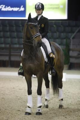Internationaal young riders paard