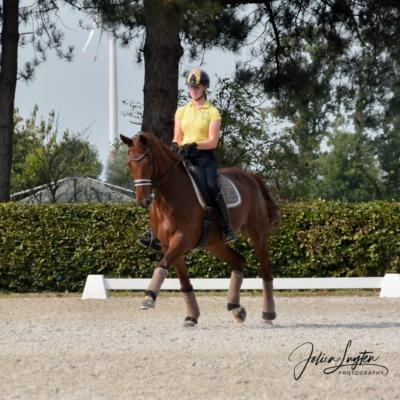 U25 paard