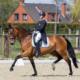 Prix St-George paard